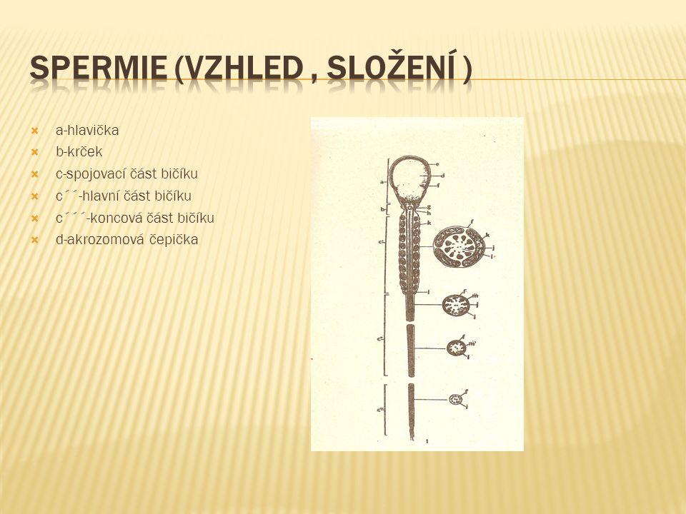 Spermie (vzhled , složení )