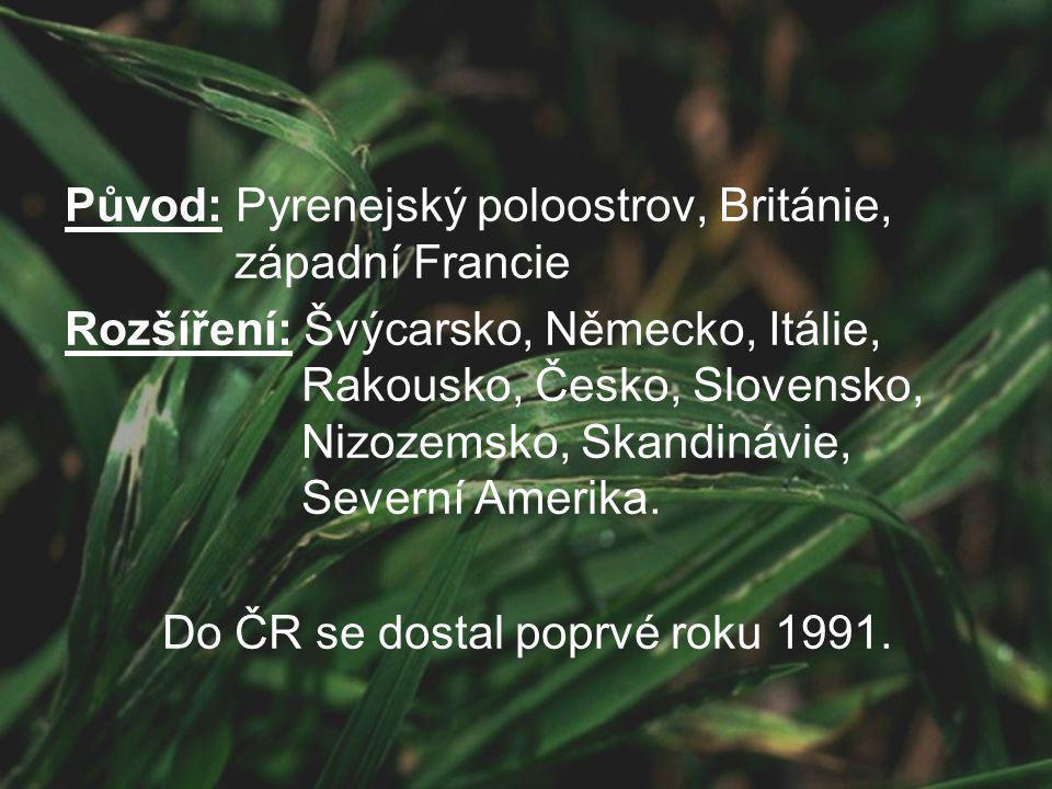 Do ČR se dostal poprvé roku 1991.