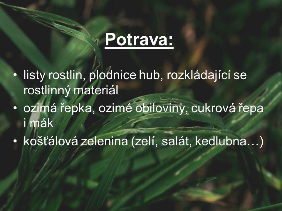 Potrava: listy rostlin, plodnice hub, rozkládající se rostlinný materiál. ozimá řepka, ozimé obiloviny, cukrová řepa i mák.