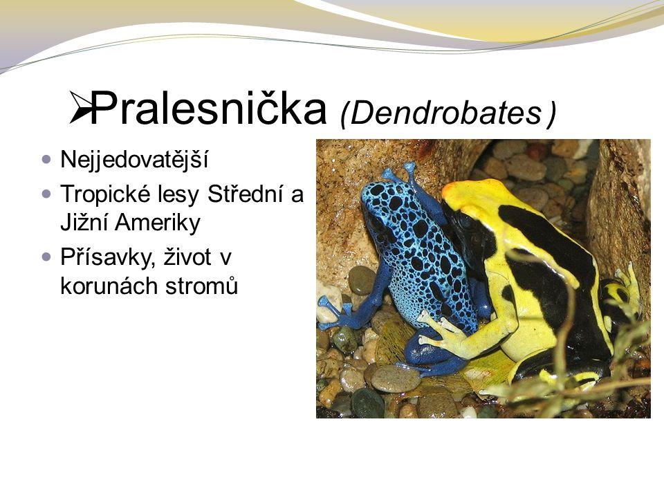 Pralesnička (Dendrobates )