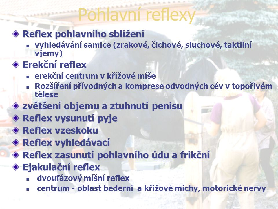 Pohlavní reflexy Reflex pohlavního sblížení Erekční reflex
