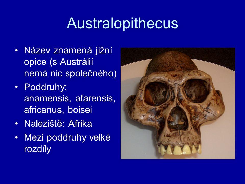 Australopithecus Název znamená jižní opice (s Austrálií nemá nic společného) Poddruhy: anamensis, afarensis, africanus, boisei.