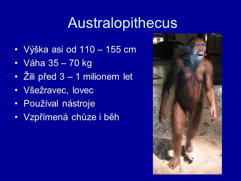 Australopithecus Výška asi od 110 – 155 cm Váha 35 – 70 kg