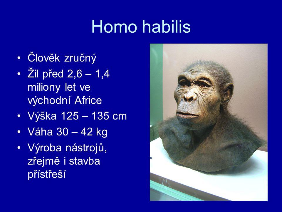 Homo habilis Člověk zručný