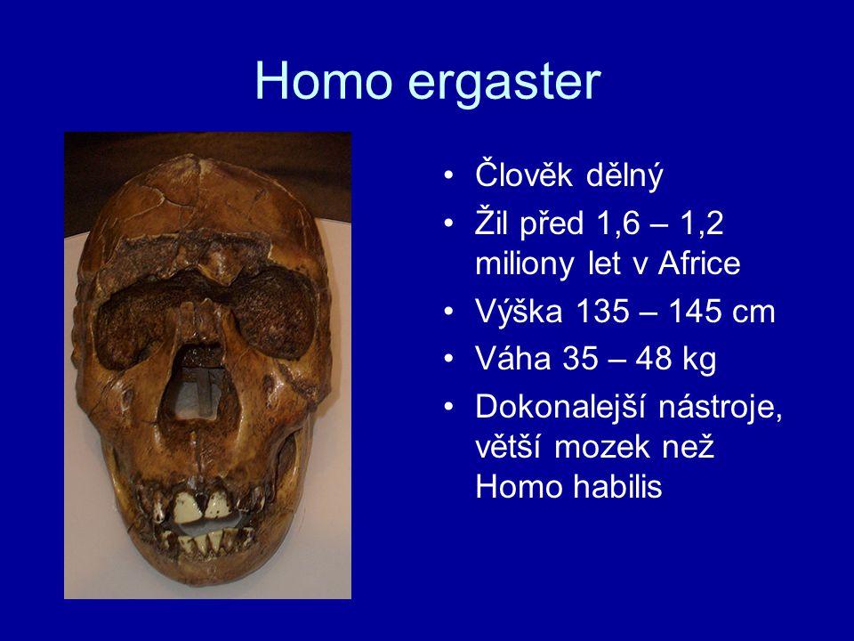 Homo ergaster Člověk dělný Žil před 1,6 – 1,2 miliony let v Africe