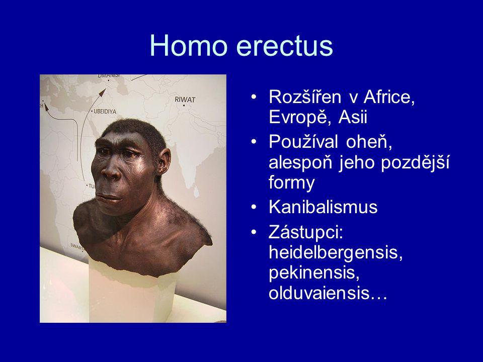 Homo erectus Rozšířen v Africe, Evropě, Asii
