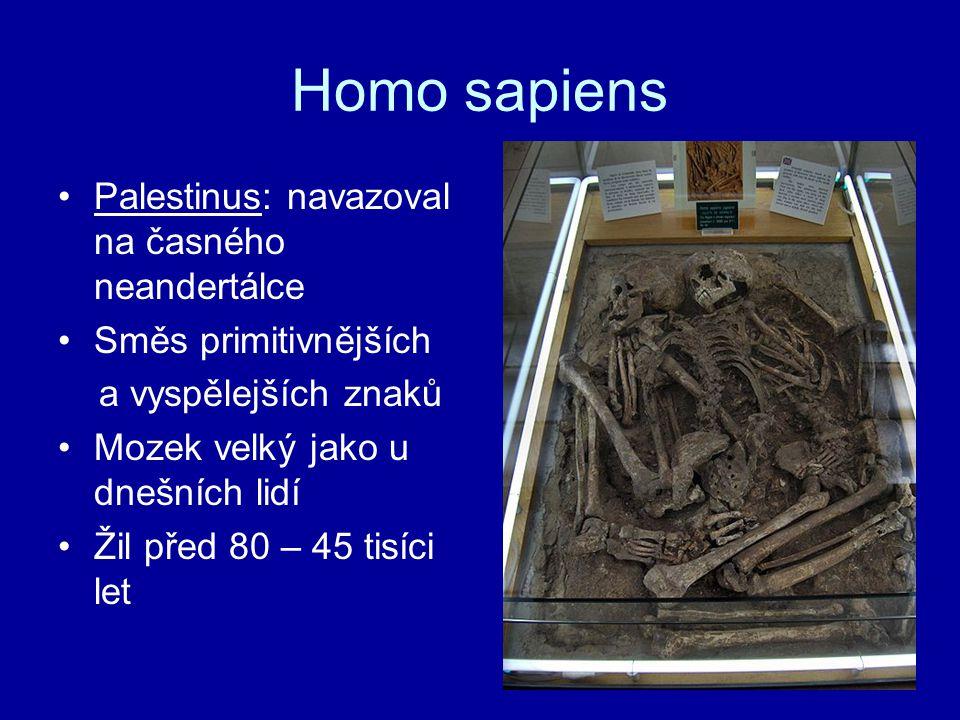 Homo sapiens Palestinus: navazoval na časného neandertálce