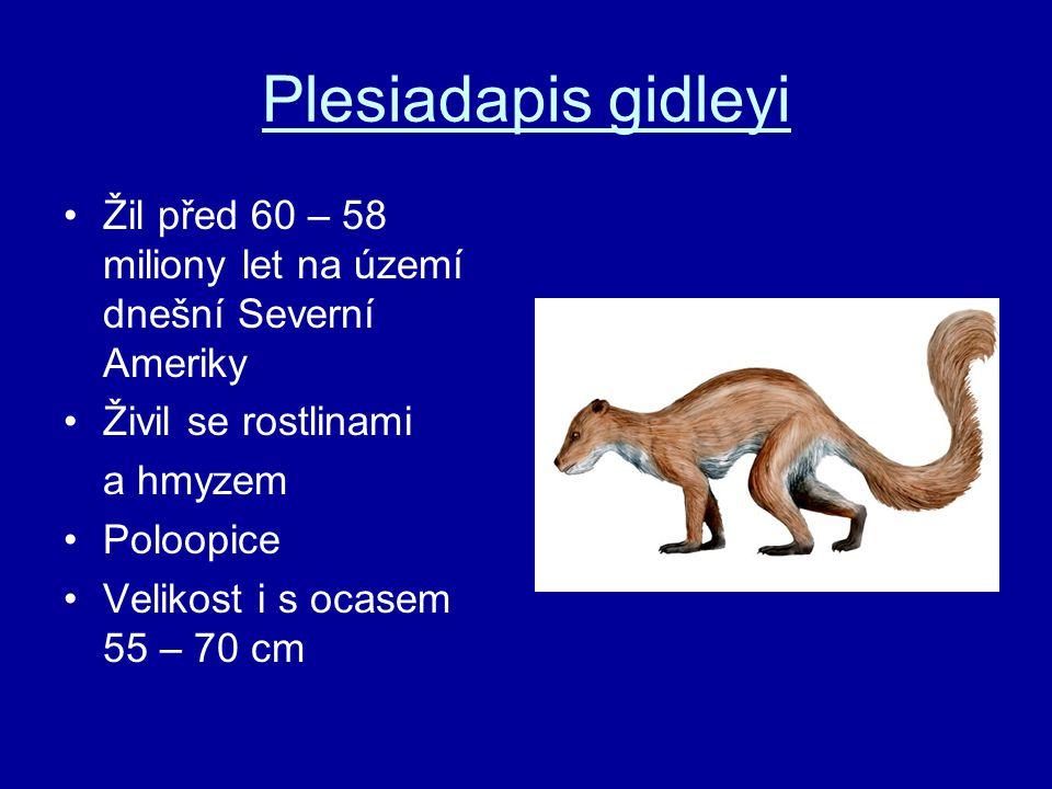 Plesiadapis gidleyi Žil před 60 – 58 miliony let na území dnešní Severní Ameriky. Živil se rostlinami.
