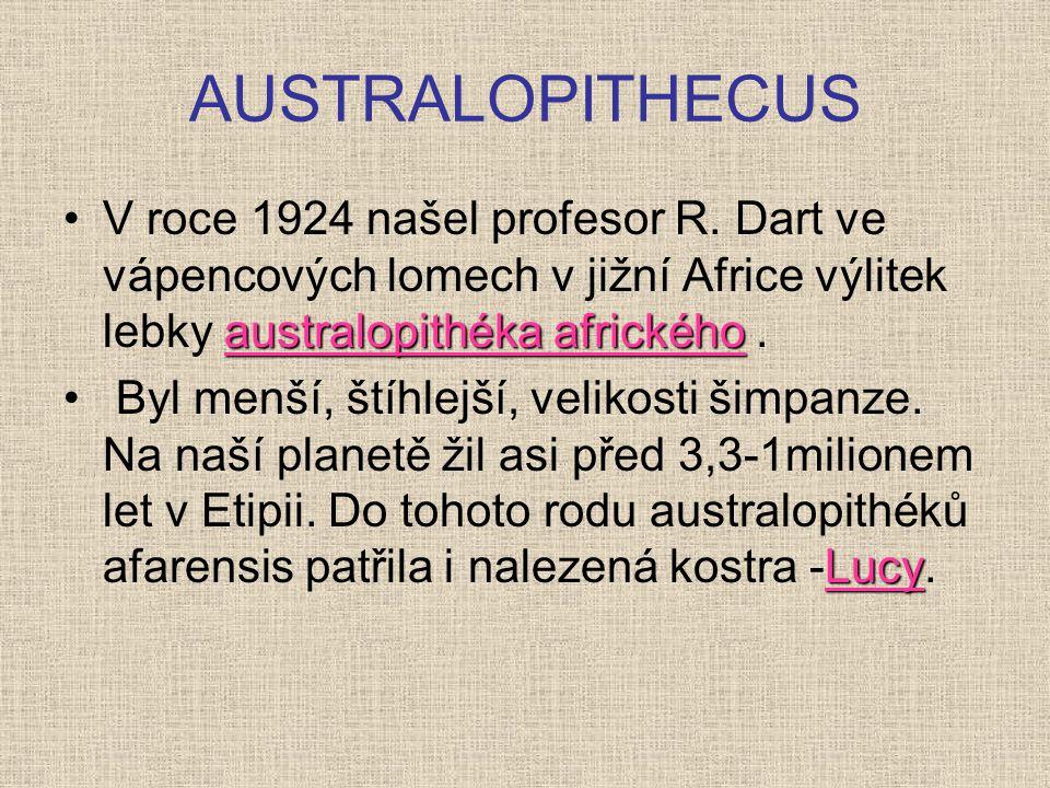 AUSTRALOPITHECUS V roce 1924 našel profesor R. Dart ve vápencových lomech v jižní Africe výlitek lebky australopithéka afrického .