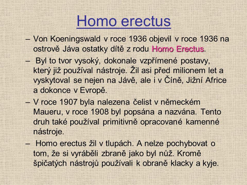 Homo erectus Von Koeningswald v roce 1936 objevil v roce 1936 na ostrově Jáva ostatky dítě z rodu Homo Erectus.