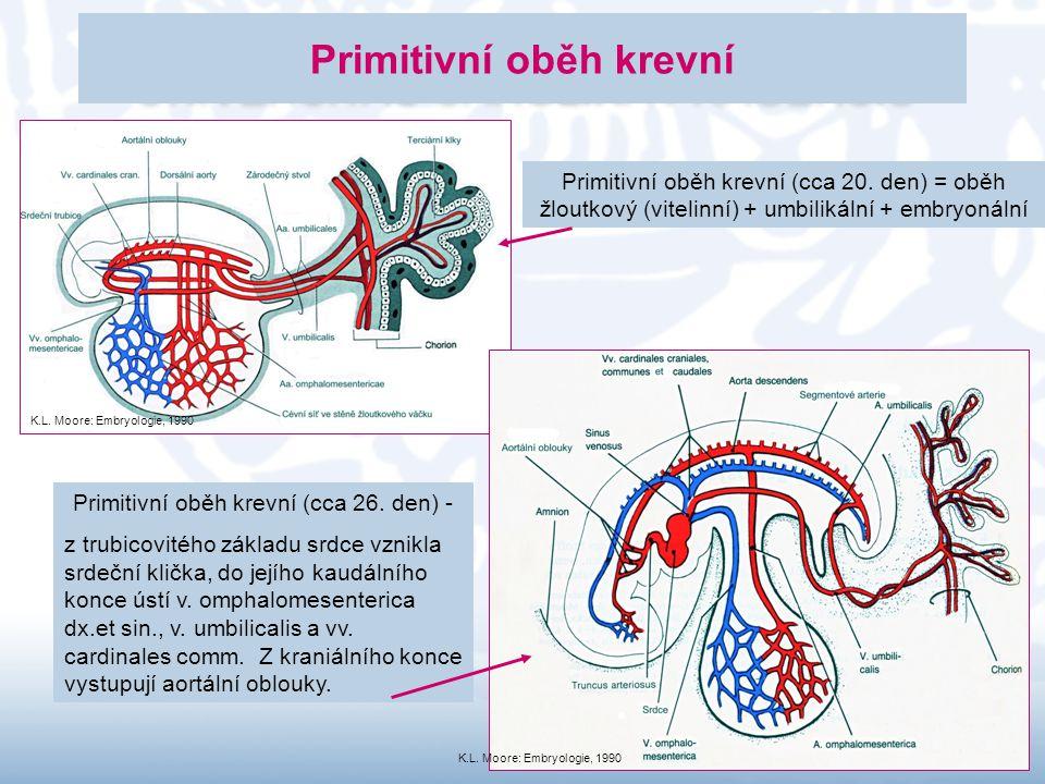 Primitivní oběh krevní