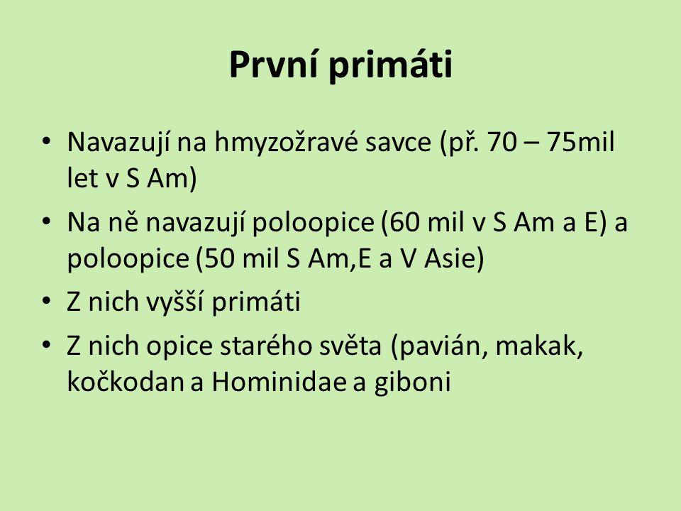 První primáti Navazují na hmyzožravé savce (př. 70 – 75mil let v S Am)
