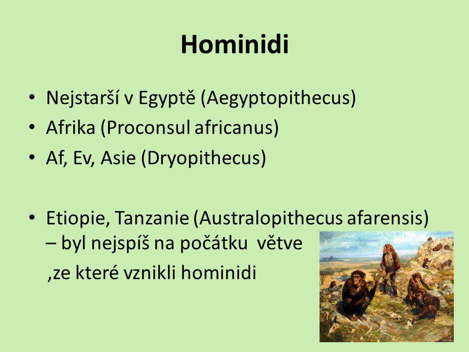 Hominidi Nejstarší v Egyptě (Aegyptopithecus)