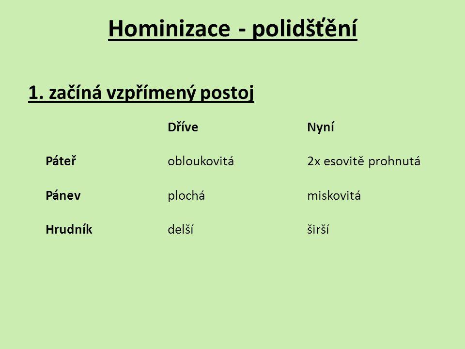 Hominizace - polidšťění