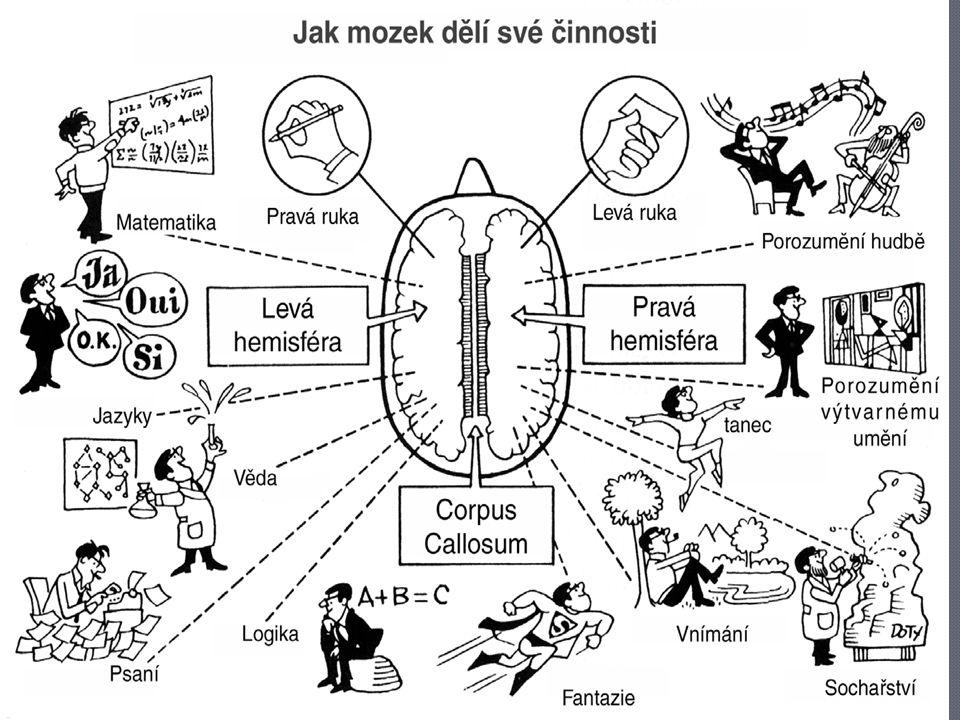 Specializace hemisfér
