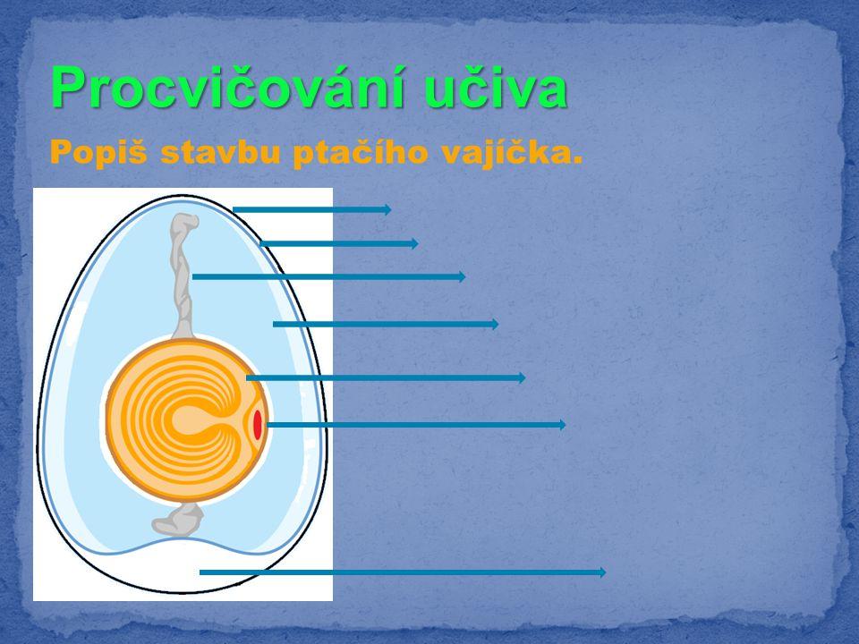 Procvičování učiva Popiš stavbu ptačího vajíčka.