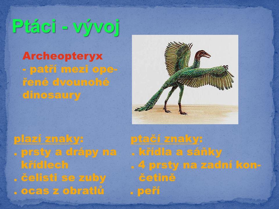 Ptáci - vývoj Archeopteryx - patří mezi ope- řené dvounohé dinosaury