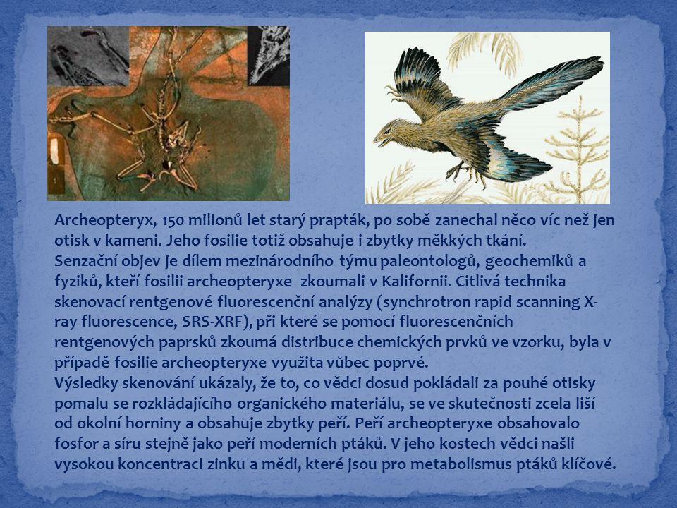 Archeopteryx, 150 milionů let starý prapták, po sobě zanechal něco víc než jen otisk v kameni. Jeho fosilie totiž obsahuje i zbytky měkkých tkání.