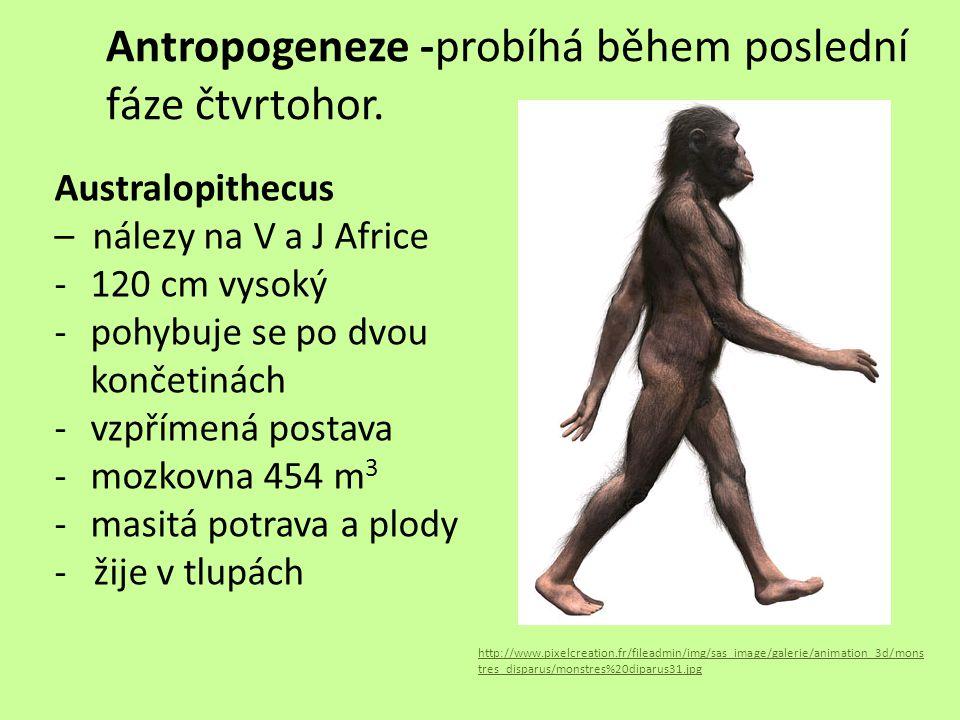 Antropogeneze -probíhá během poslední fáze čtvrtohor.