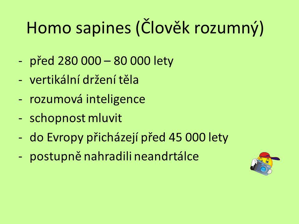 Homo sapines (Člověk rozumný)
