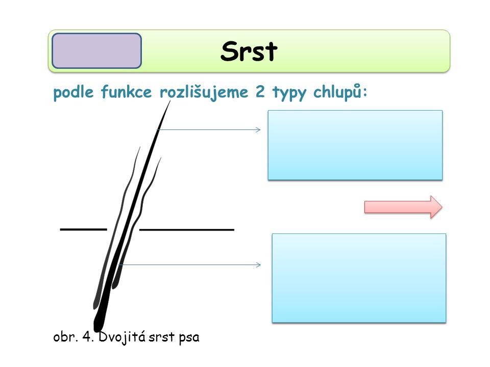 Srst pesíky podsada podle funkce rozlišujeme 2 typy chlupů: