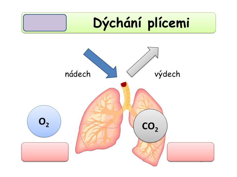 Dýchání plícemi nádech výdech O2 CO2 kyslík oxid uhličitý
