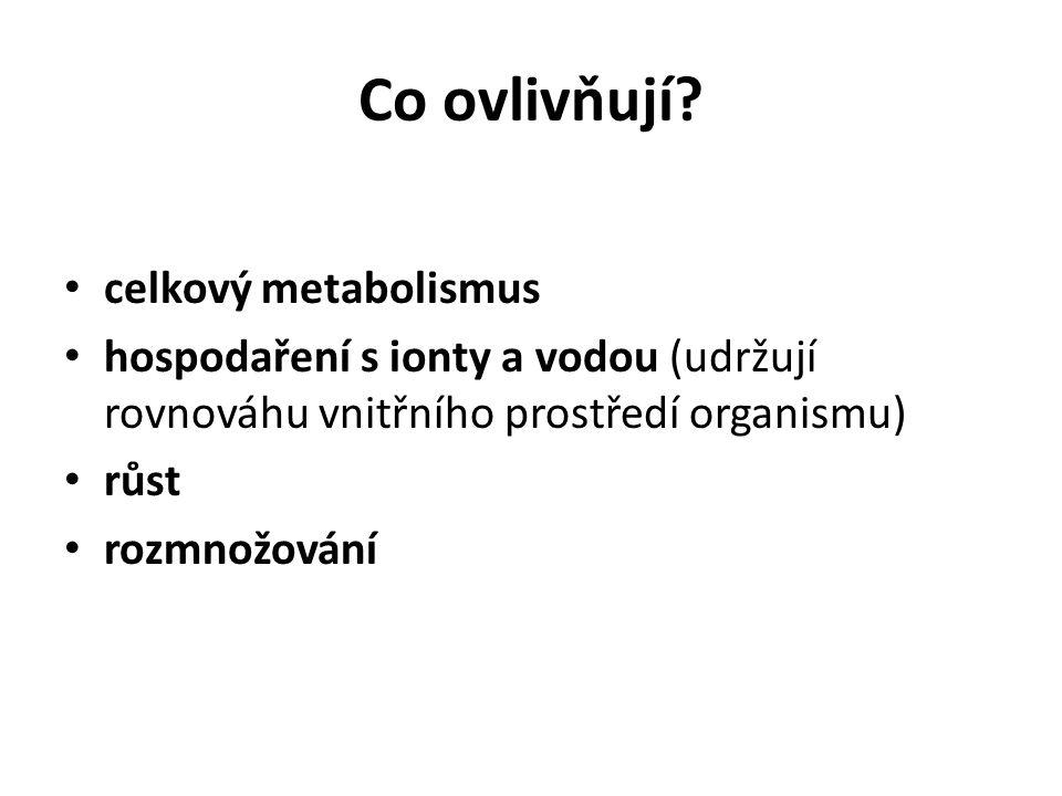 Co ovlivňují celkový metabolismus