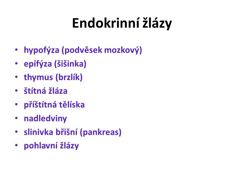 Endokrinní žlázy hypofýza (podvěsek mozkový) epifýza (šišinka)