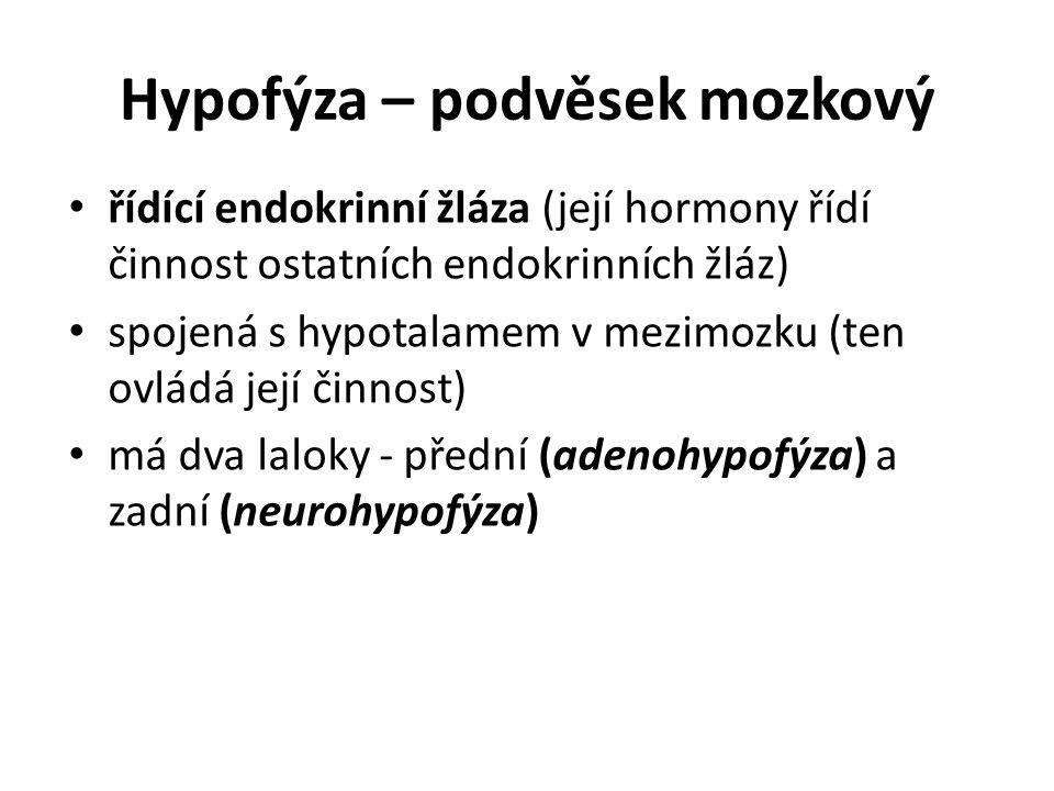 Hypofýza – podvěsek mozkový
