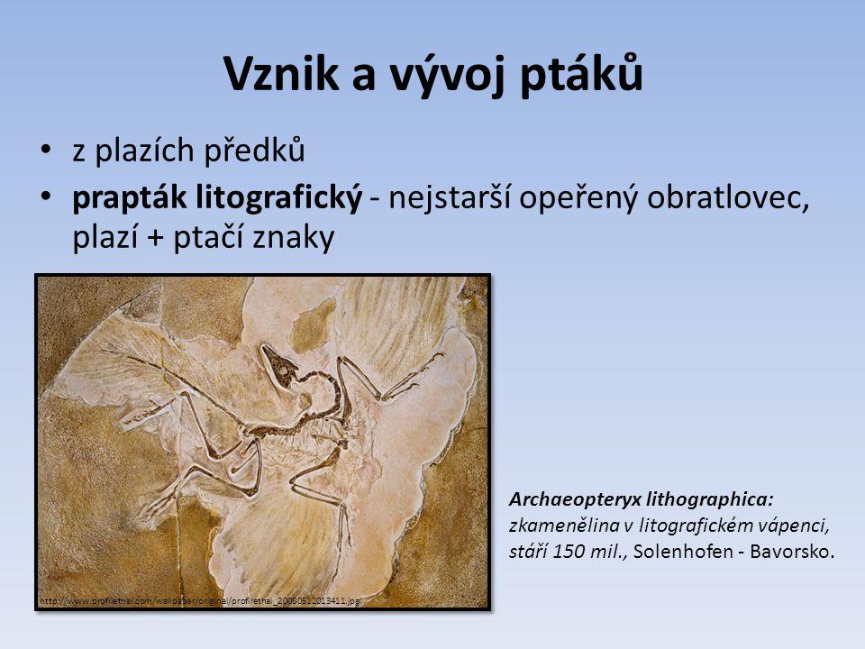 Vznik a vývoj ptáků z plazích předků