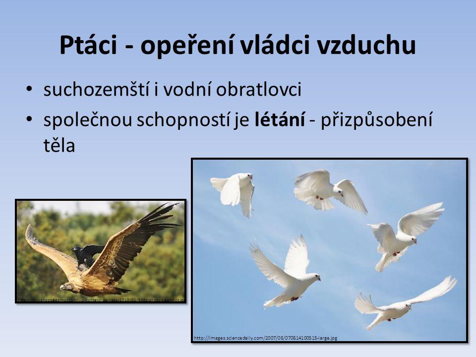 Ptáci - opeření vládci vzduchu