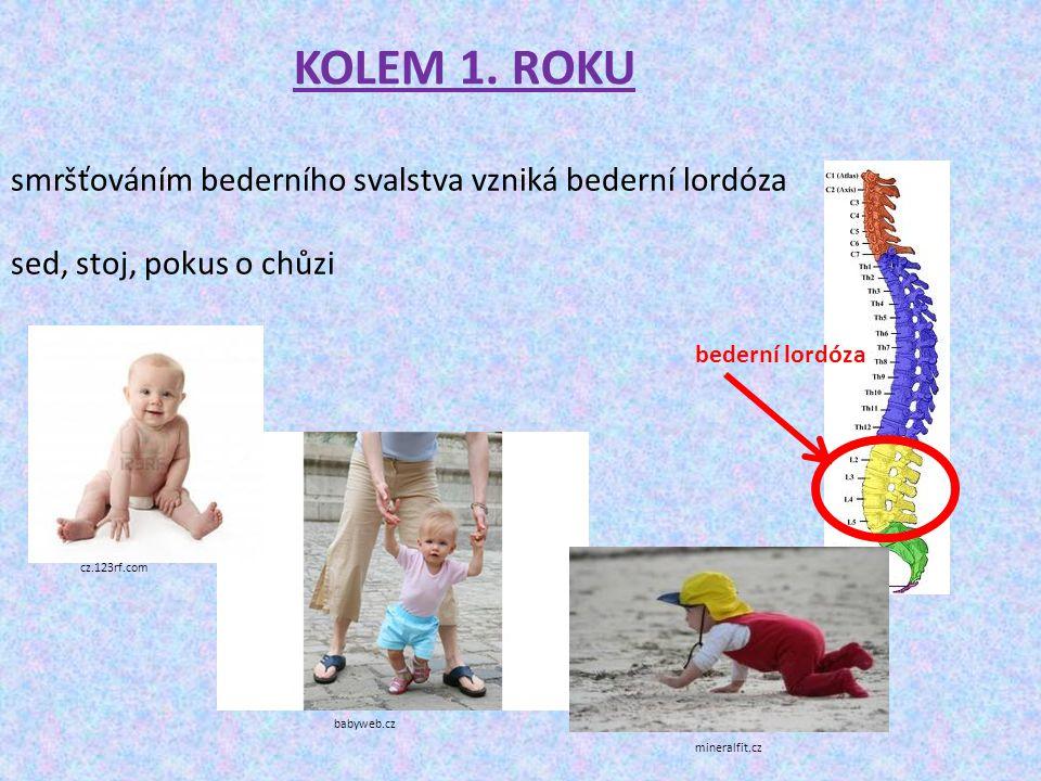 KOLEM 1. ROKU smršťováním bederního svalstva vzniká bederní lordóza