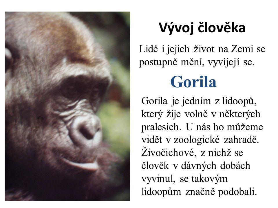 Vývoj člověka Lidé i jejich život na Zemi se postupně mění, vyvíjejí se. Gorila.