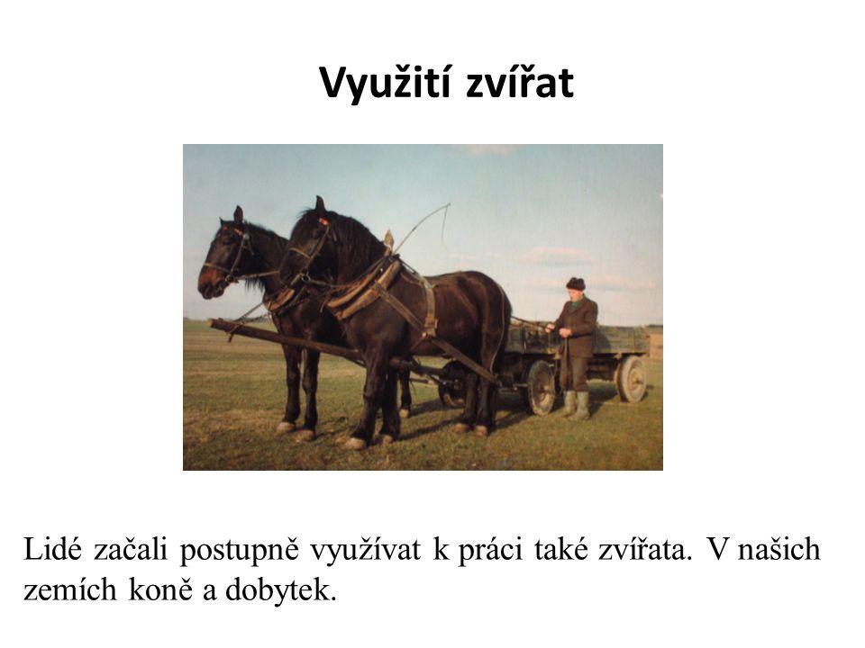 Využití zvířat Lidé začali postupně využívat k práci také zvířata. V našich zemích koně a dobytek.
