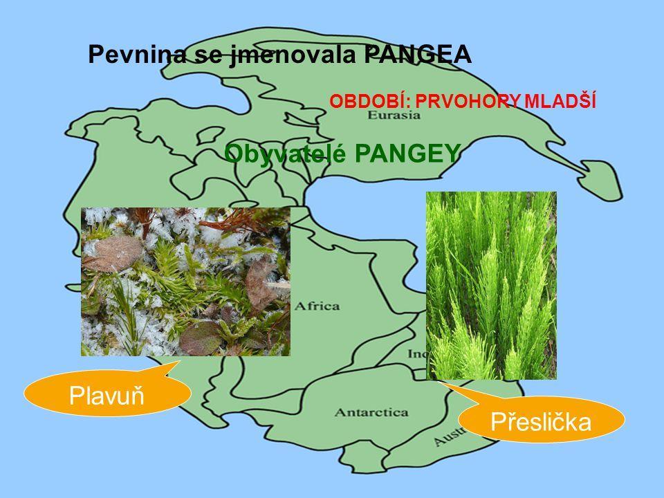 Pevnina se jmenovala PANGEA
