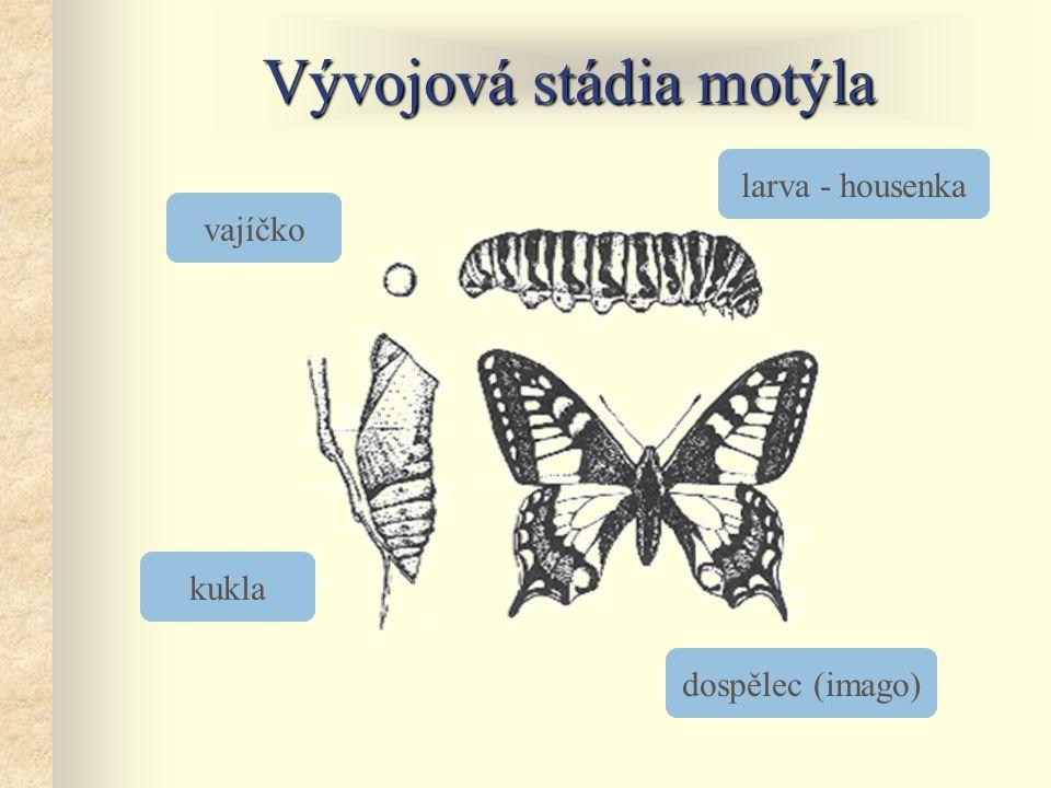 Vývojová stádia motýla