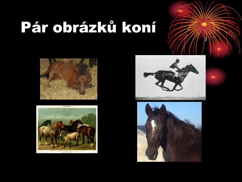 Pár obrázků koní