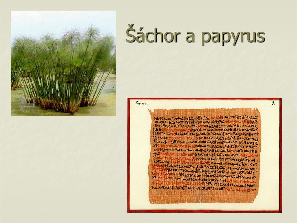 Šáchor a papyrus