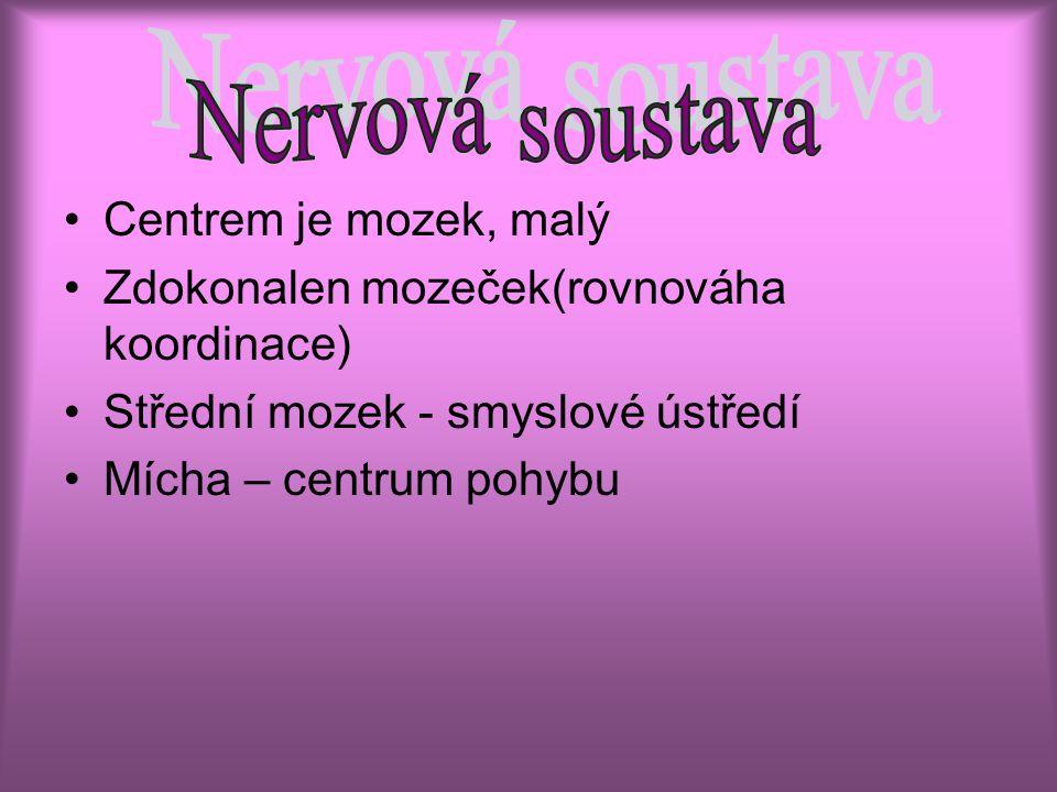 Nervová soustava Centrem je mozek, malý