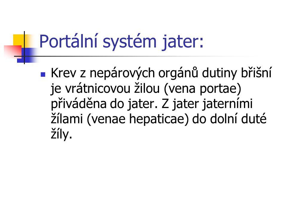 Portální systém jater: