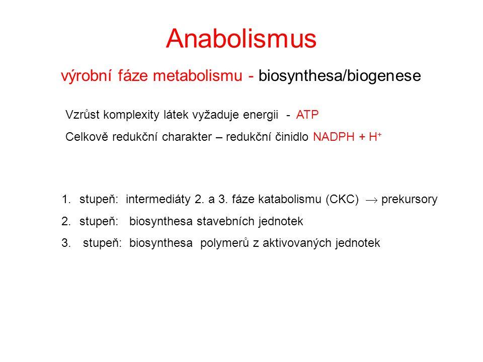 výrobní fáze metabolismu - biosynthesa/biogenese