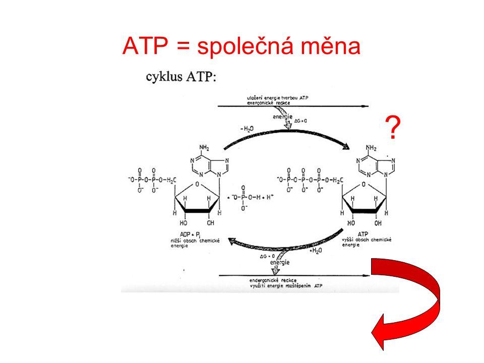 ATP = společná měna