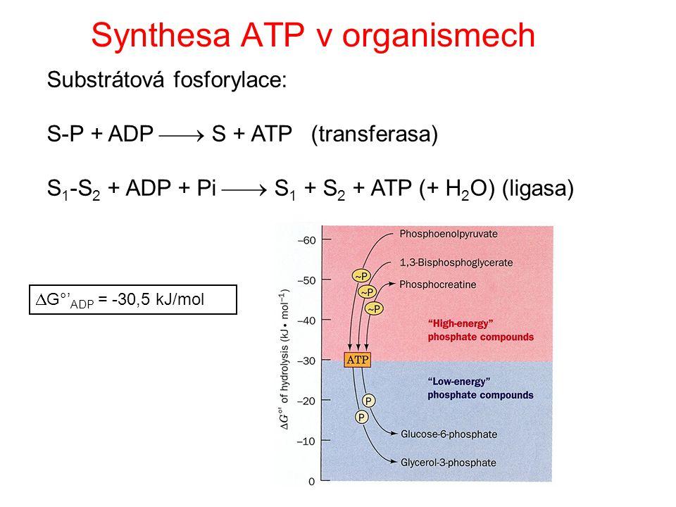 Synthesa ATP v organismech