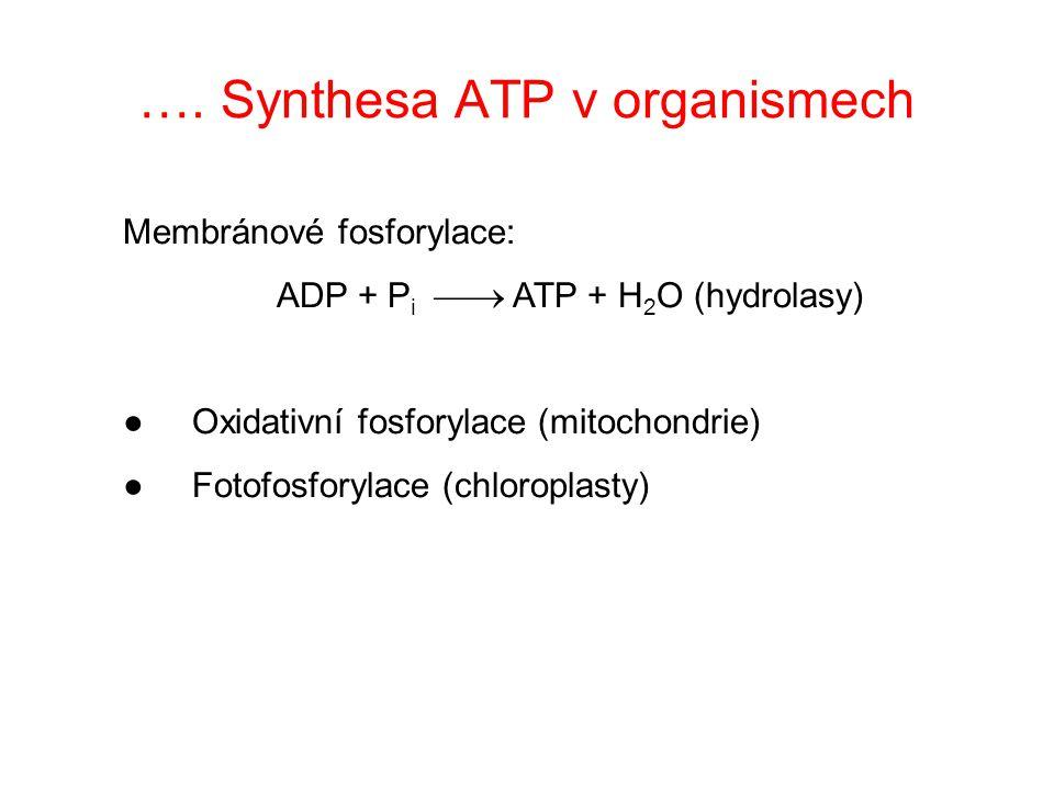 …. Synthesa ATP v organismech