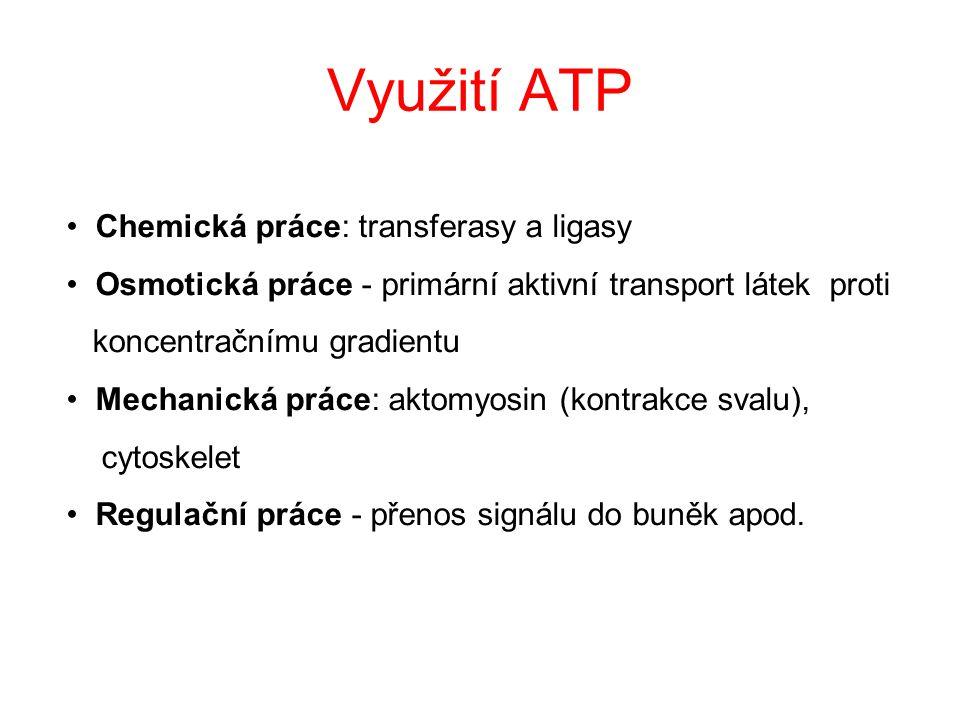 Využití ATP Chemická práce: transferasy a ligasy