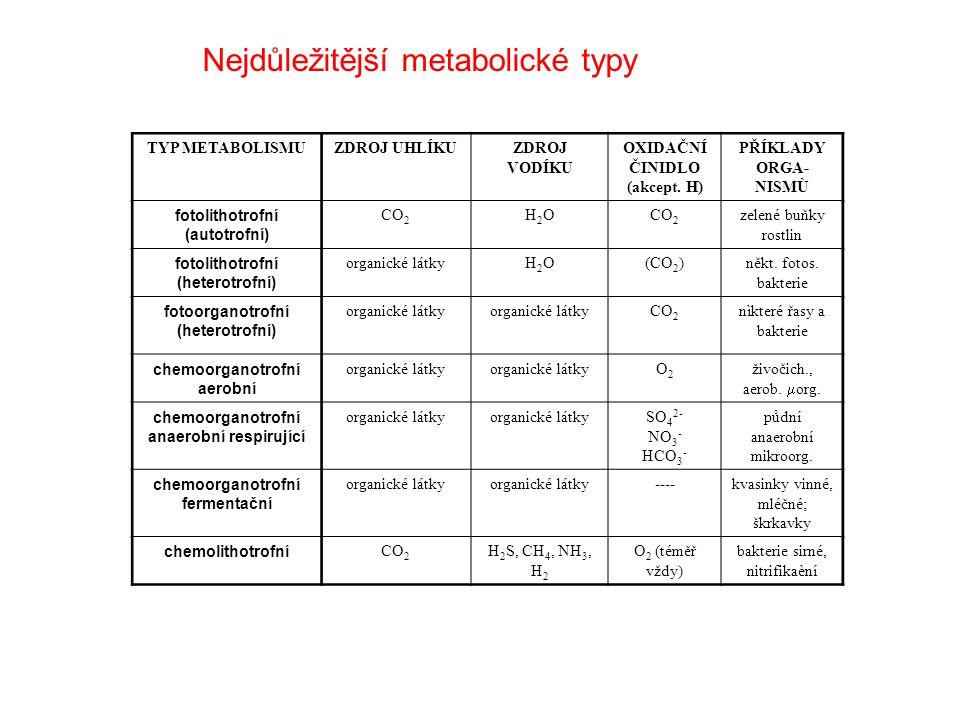 Nejdůležitější metabolické typy