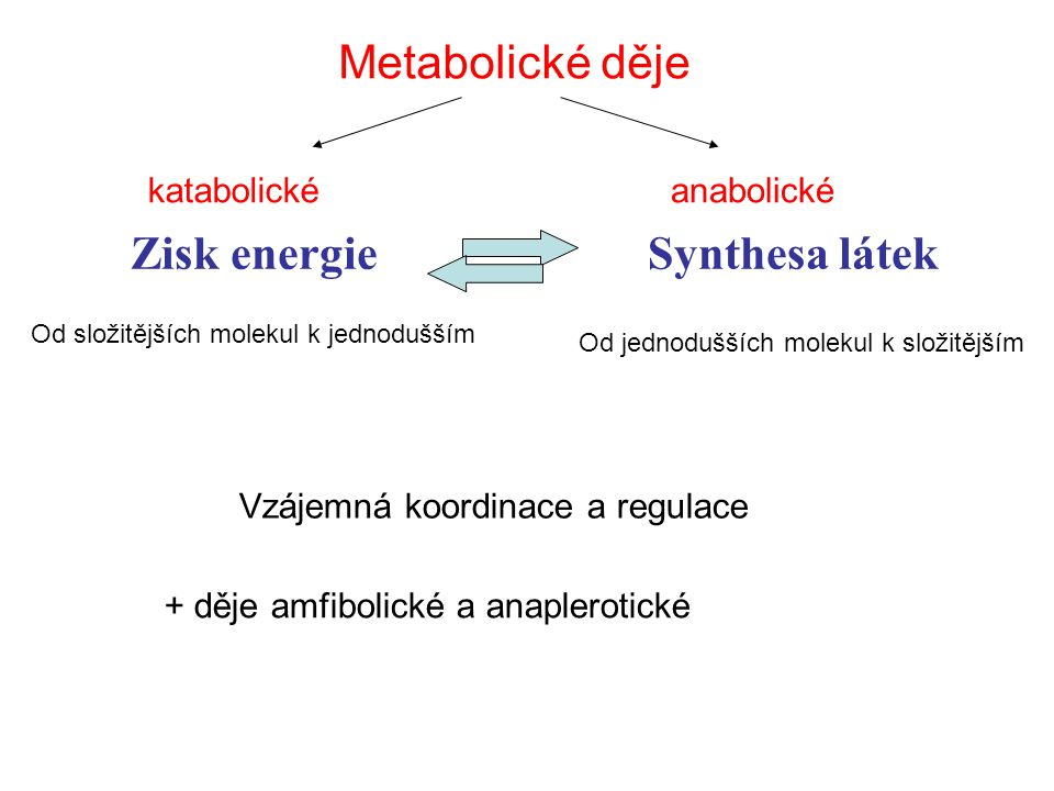 Zisk energie Synthesa látek