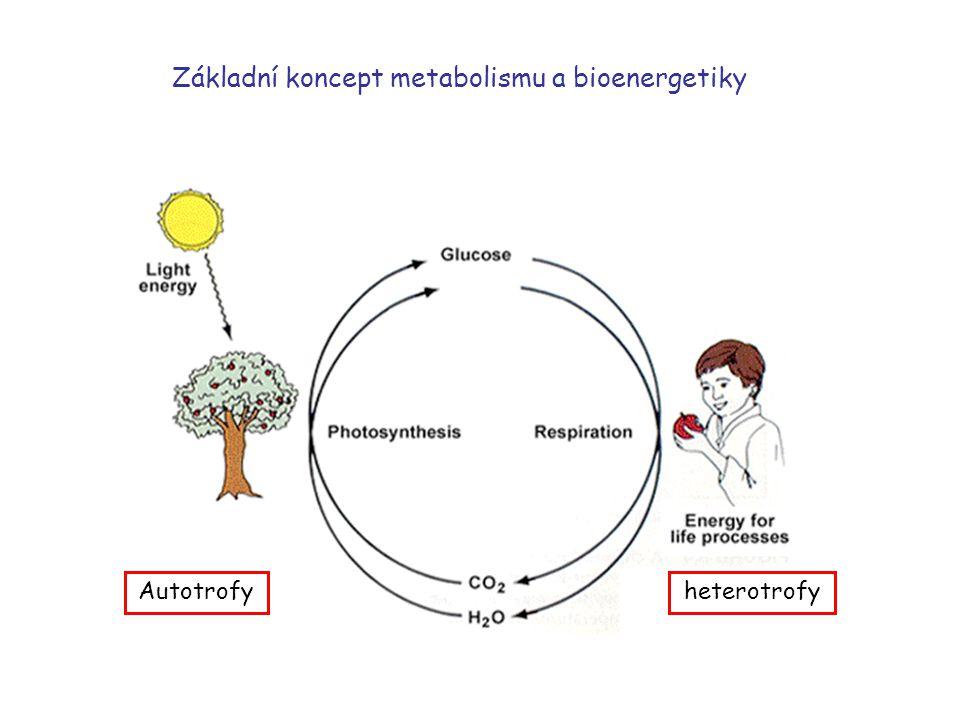 Základní koncept metabolismu a bioenergetiky