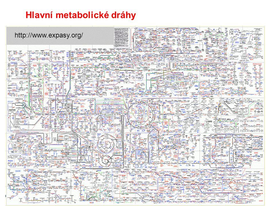 Hlavní metabolické dráhy