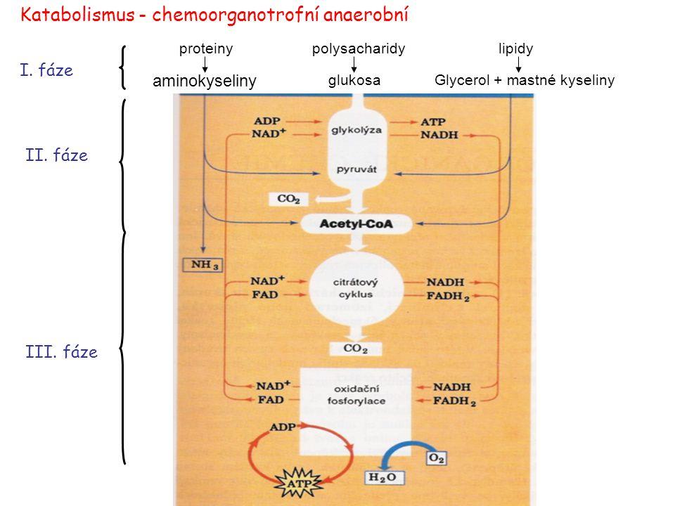 Katabolismus - chemoorganotrofní anaerobní